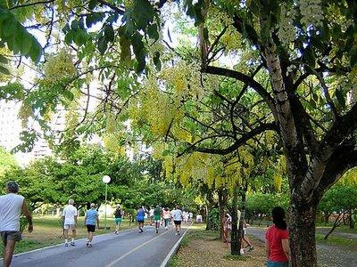 Importando ideias e projetos II. Instalação de um parque urbano em Maceió